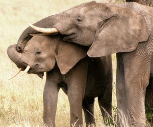 animal, elefants, and animals image