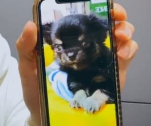 details, phone, and cute image