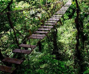 nature, green, and bridge image