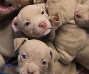 puppies, puppy, and so cute image