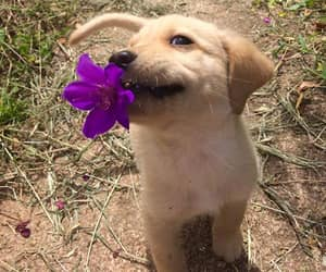 happy puppy, cute, and puppy image