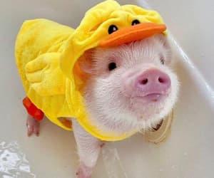 OMG, pigglet, and little pig image