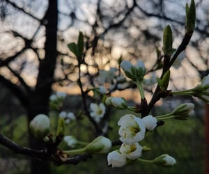 flowers, spring, and hope image