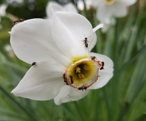 flowers, insect, and naturelover image