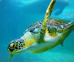 animals, sea turtle, and turtle image