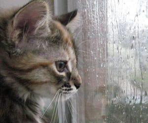 cat, rain, and pet image