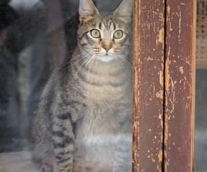 cat, window, and animals image