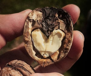 heart, lovenature, and love image
