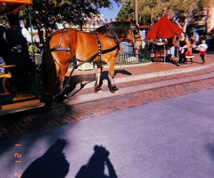 carriage, horse, and mickey ears image