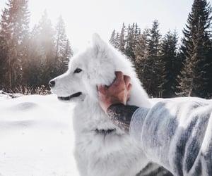 dog, winter, and animal image
