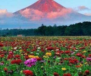 colors, couleur, and fleur image
