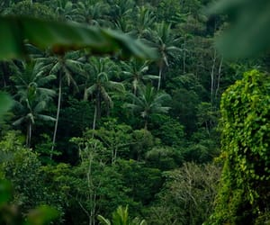 green, jungle, and nature image