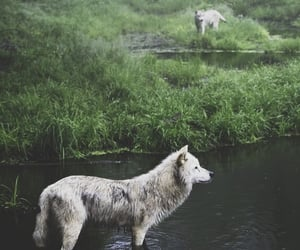 animals, forest, and moonlight image