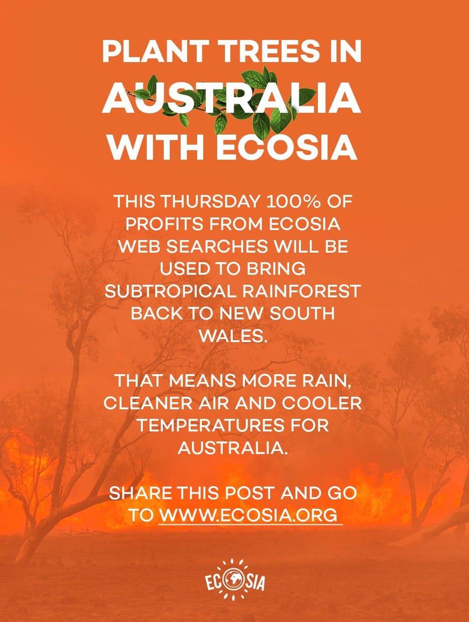 article, koalas, and australia image