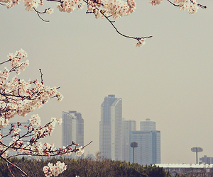 cherry, cherry blossom, and pink image