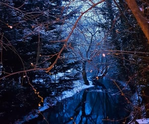 forest, nature, and navy blue image