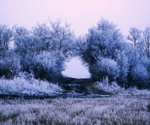 frost, lavender, and Maine image