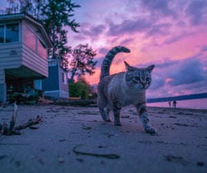 cat, animal, and clouds image
