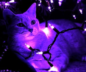 light, aesthetic, and cat image