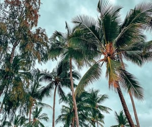 nature and palms image