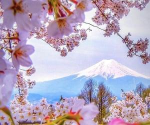 fleur, rose, and ربيع image