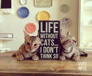 adorable, Gatos, and hogar image
