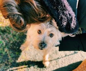 dog, high quality, and photo image