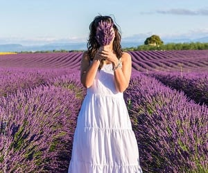 beautiful, france, and lavender image