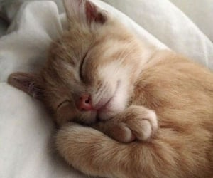 cat, cute, and animals image