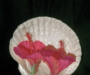 flower, seashell, and photographers on tumblr image