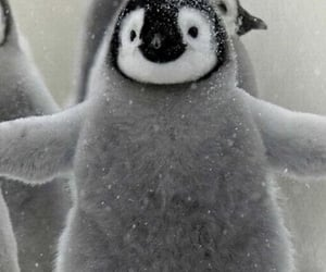 penguin, cute, and animal image