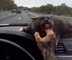 cat, car, and tattoo image