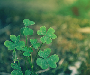 clover, green, and beautiful image