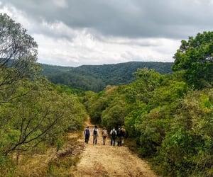 brazil, landscape, and biology image