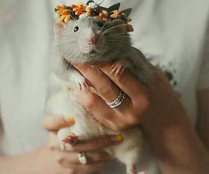mouse, animal, and happy image