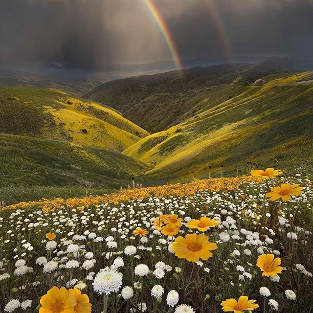 california, daisies, and flowers image