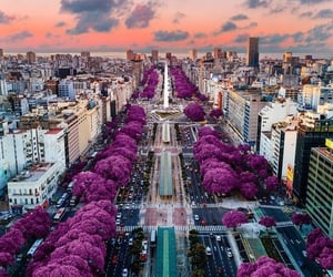 argentina, viajes, and article image