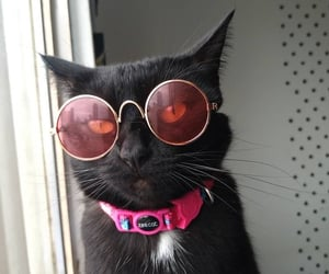 animals, Gatos, and pets image