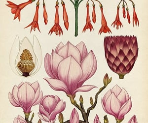 book, books, and botany image