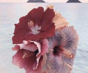 flowers, ocean, and summer image