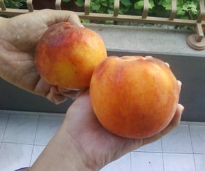 bulgaria, peaches, and vacation image