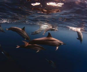 ocean, dolphin, and sea image
