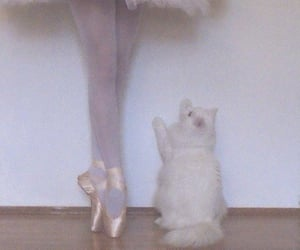 cat, ballet, and ballerina image