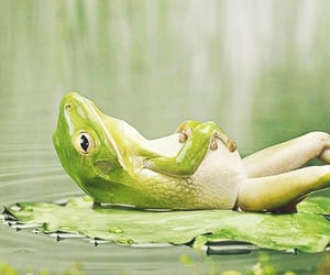 animals, green frog, and wildlife image