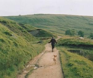 dog, nature, and green image