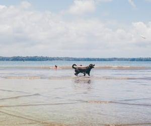 couple, natureza, and praia image