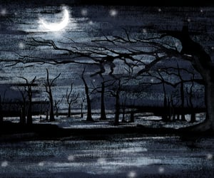 background, forest, and night image