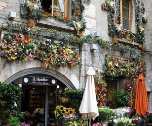 flowers, france, and annecy image