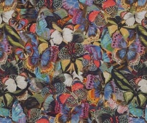butterfly and theme image