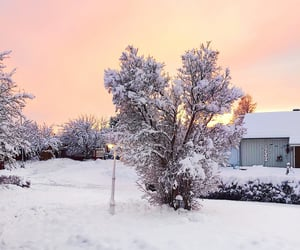 cold, pink, and snow image